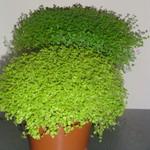 Wilt u een (Kruiden)tuintje aanleggen met Kruiden/Planten die niet ...